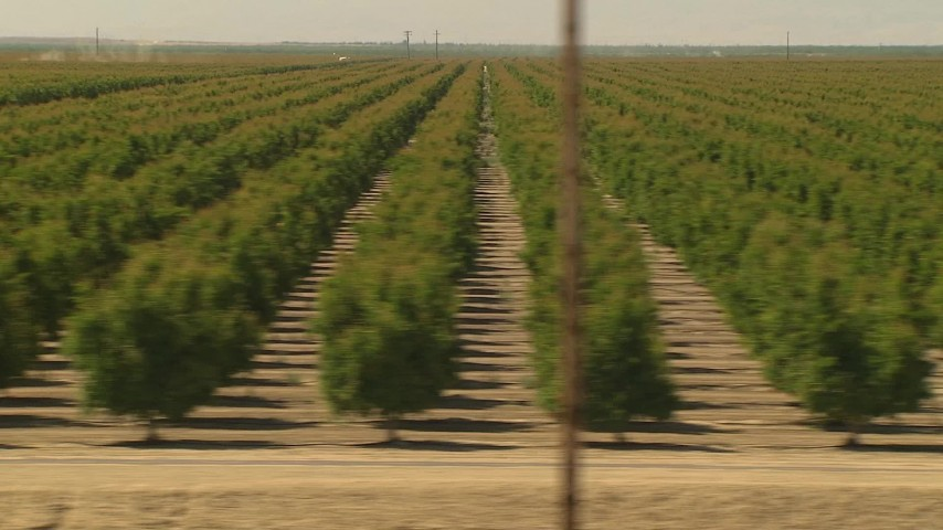 flying low by rows of crops central valley california