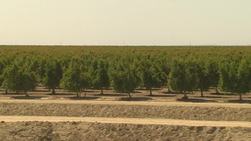 1080 stock footage aerial video long rows of orchard trees, Central Valley, California Aerial Stock Footage | AI06_FRM_122