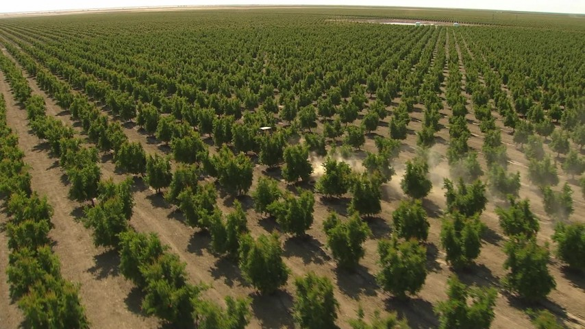 1080 stock footage aerial video fly over orchard and reveal tractor kicking up dust, Central Valley, California Aerial Stock Footage | AI06_FRM_127