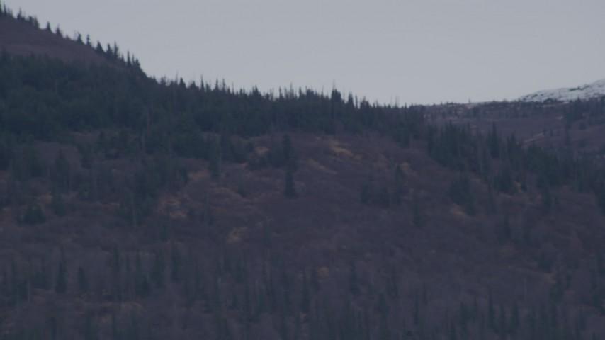 4K stock footage aerial video of evergreens near snow covered peaks, Chugach Mountains, Alaska Aerial Stock Footage   AK0001_0238