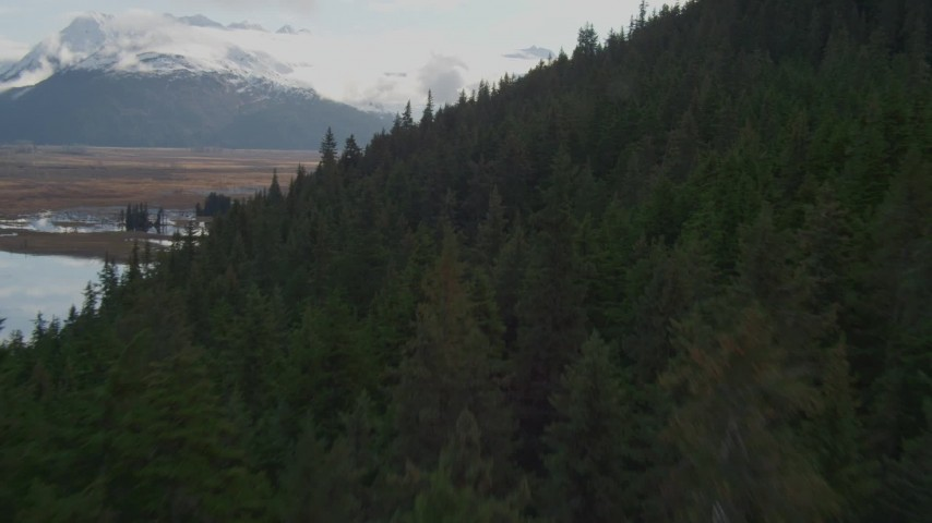 4K stock footage aerial video flying low over forested slope, Kenai Mountains, Alaska Aerial Stock Footage | AK0001_0380