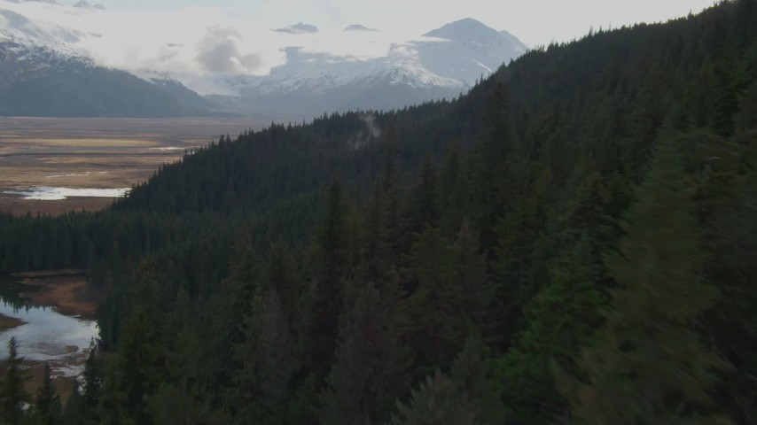4K stock footage aerial video fly low over forested slope, approaching grassland, Kenai Mountains, Alaska Aerial Stock Footage | AK0001_0381