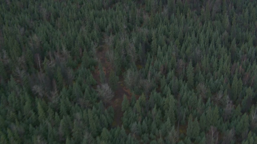 4K stock footage aerial video bird's eye view flying over a forest during winter, Butte, Alaska Aerial Stock Footage | AK0001_0692