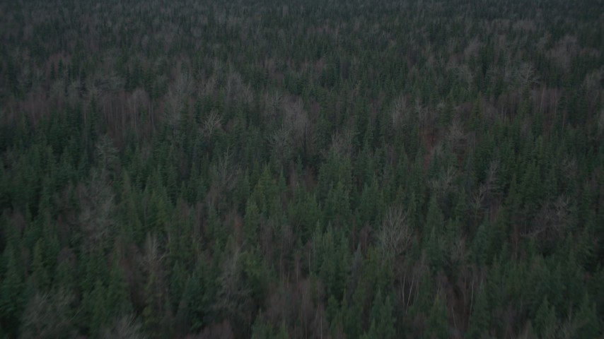 4K stock footage aerial video flying over forest, tilt down to trees, during winter, Butte, Alaska Aerial Stock Footage | AK0001_0693