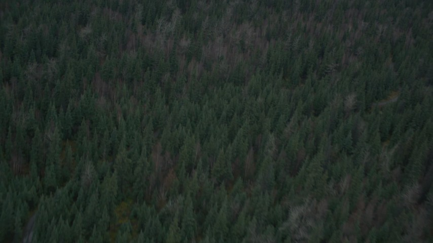 4K stock footage aerial video a bird's eye view of forest during winter, Butte, Alaska Aerial Stock Footage | AK0001_0694