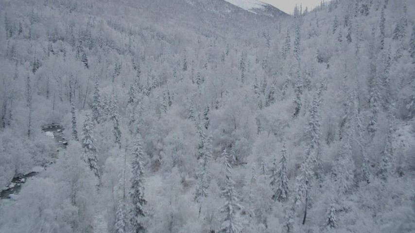 4K aerial video fly low over snow-covered trees, reveal river, Chugach Mountains, Alaska Aerial Stock Footage | AK0001_0762