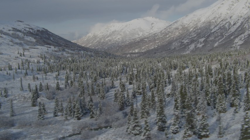 4K stock footage aerial video fly by a snow forest, snow-covered Chugach Mountains, Alaska Aerial Stock Footage | AK0001_0804