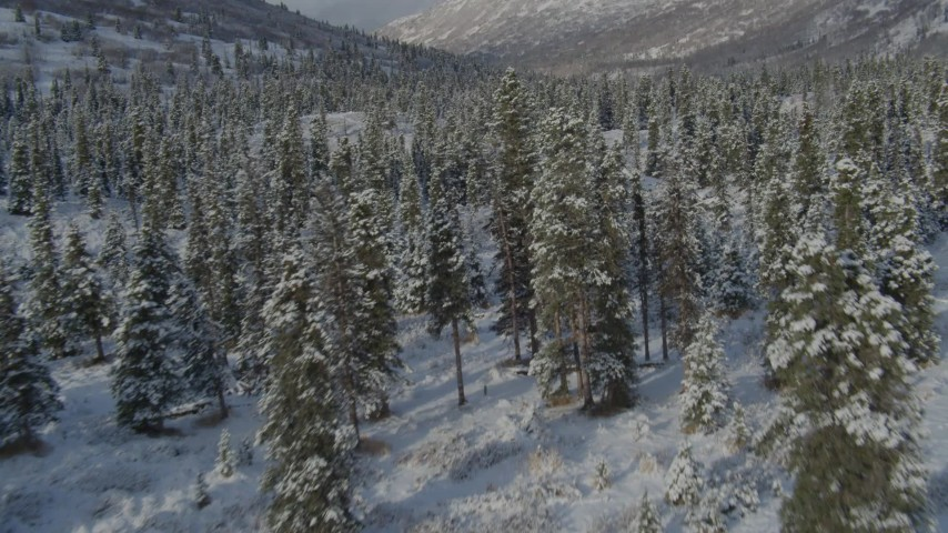 4K stock footage aerial video fly low over trees in snowy valley, revealing river, Chugach Mountains, Alaska Aerial Stock Footage | AK0001_0805