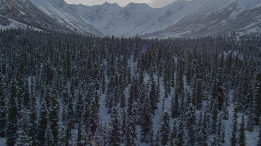4K aerial video flying low over frosty treetops near snow-covered Chugach Mountains, Alaska Aerial Stock Footage | AK0001_0807
