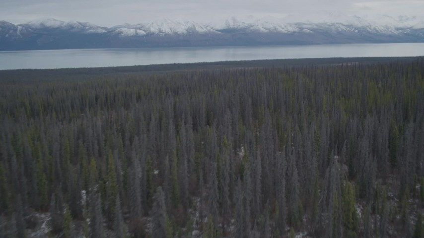 4K stock footage aerial video flying over forest toward snow-covered Chugach Mountains, Tazlina Lake, Alaska Aerial Stock Footage | AK0001_0909