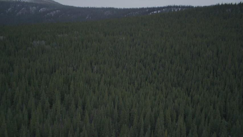4K aerial video flying over wooded hills, during winter, Alaskan Wilderness Aerial Stock Footage | AK0001_0966