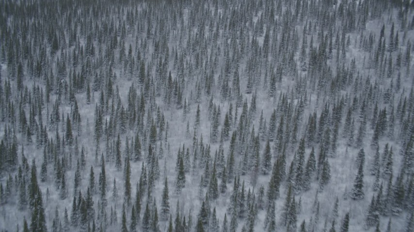 4K aerial video flying over snow-covered forests and wooded hills, Alaskan Wilderness Aerial Stock Footage | AK0001_0969