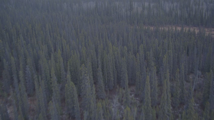4K aerial video flying away from trees in the Alaskan Wilderness Aerial Stock Footage | AK0001_1037