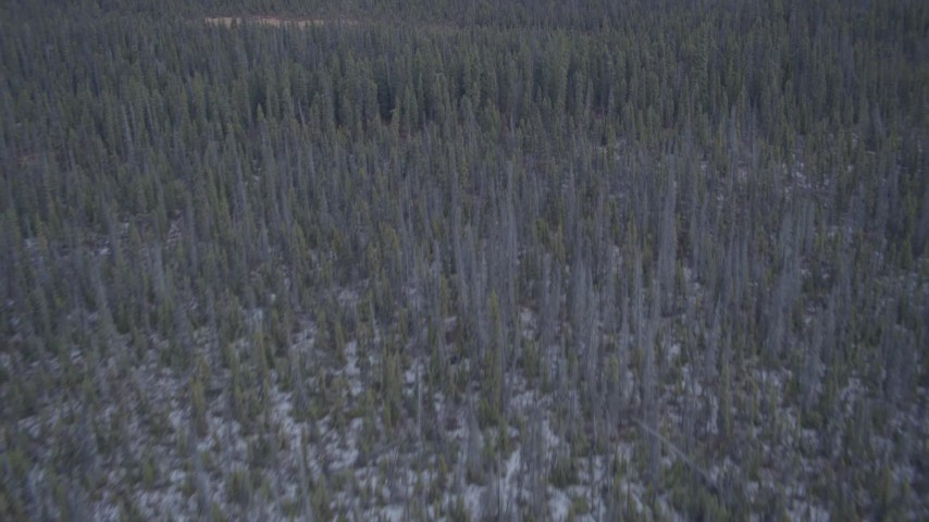 4K stock footage aerial video flying away from wetlands over snow covered forest, Alaskan Wilderness Aerial Stock Footage | AK0001_1038