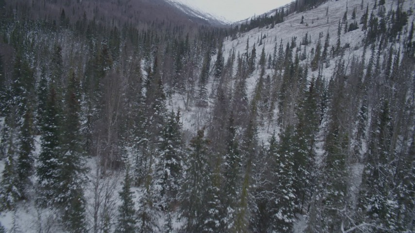 4K stock footage aerial video flying over snowy, wooded valley and river, Chugach Mountains, Alaska Aerial Stock Footage | AK0001_1191