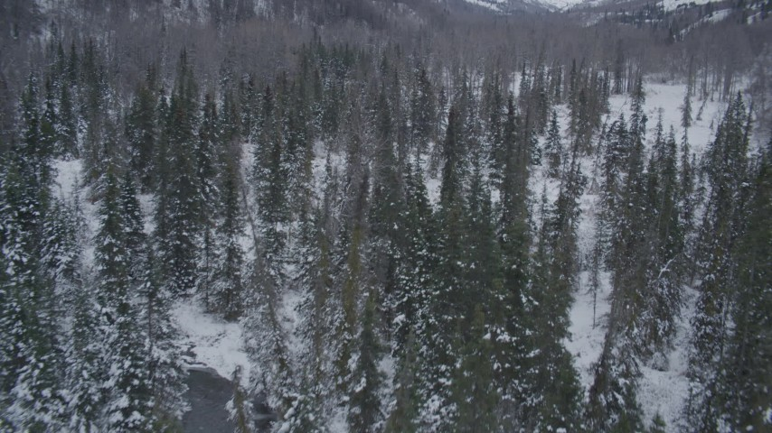 4K stock footage aerial video flying low over snow covered, wooded valley, Chugach Mountains, Alaska Aerial Stock Footage | AK0001_1197