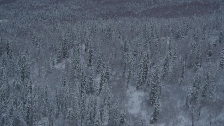 4K stock footage aerial video flying low over snowy forest toward wooded slopes, Chugach Mountains, Alaska Aerial Stock Footage | AK0001_1532