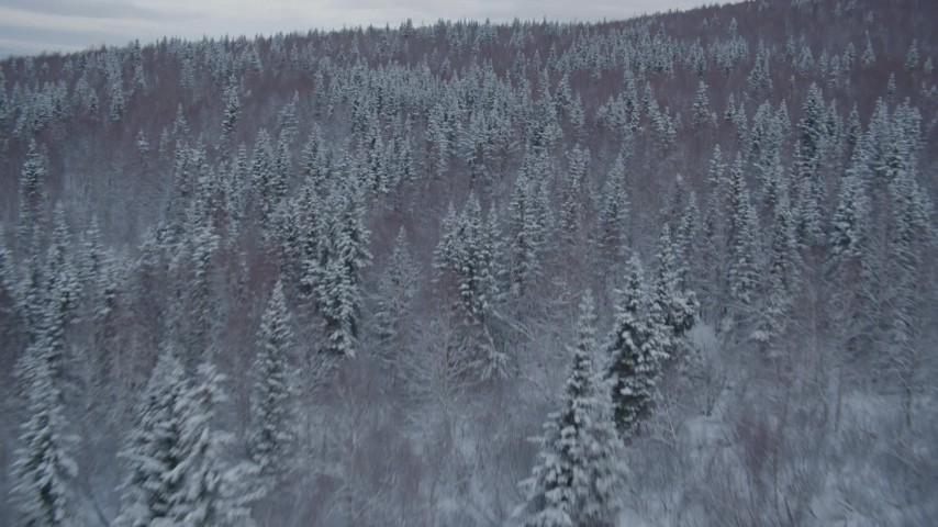 4K aerial video flying low over snow covered wooded slopes revealing Chugach Mountains, Alaska Aerial Stock Footage | AK0001_1533
