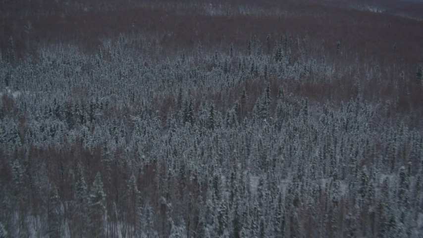 4K aerial video flying over snow covered wooded hills at base of Chugach Mountains, Alaska Aerial Stock Footage | AK0001_1616