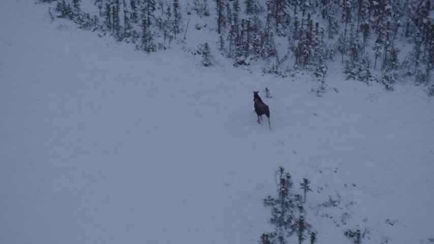 4K stock footage aerial video a moose trotting out of the snow covered woods at twilight, Point MacKenzie, Alaska Aerial Stock Footage | AK0001_1666