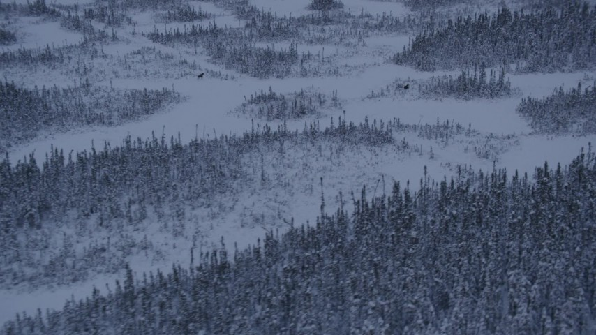 4K stock footage aerial video woods and snow in Point MacKenzie revealing two moose at twilight, Alaska Aerial Stock Footage | AK0001_1667