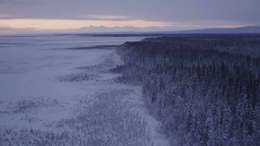 4K stock footage aerial video flying over frozen, snowy ground, two moose at twilight, Point MacKenzie, Alaska Aerial Stock Footage | AK0001_1696