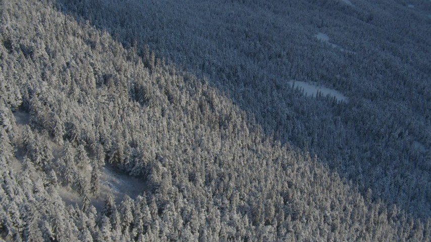 4K stock footage aerial video snowy, wooded slopes cut by shadow in Chugach Mountains, Alaska Aerial Stock Footage | AK0001_1758
