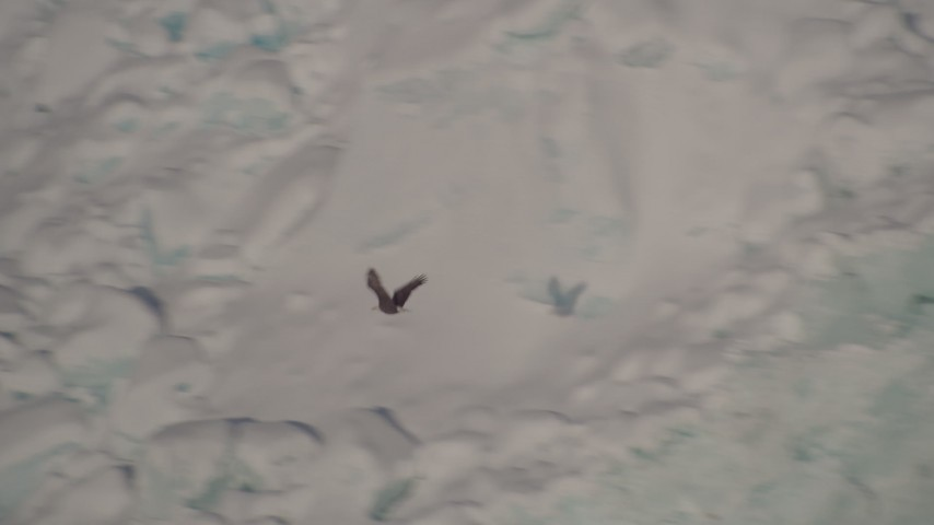 4K stock footage aerial video tracking an eagle flying past a snow covered glacier, Harriman Fjord, Alaska Aerial Stock Footage | AK0001_1819
