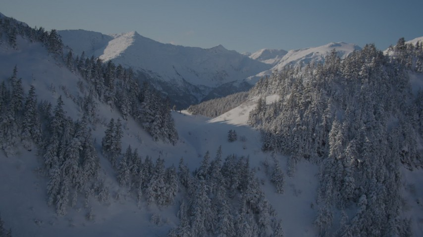 4K aerial video approach snowy ridge spotted with clusters of trees, Chugach Mountains, Alaska Aerial Stock Footage | AK0001_1889