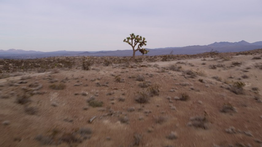 5K stock footage aerial video approach and fly low over a desert hill with a lone Joshua Tree in the Mojave Desert, California Aerial Stock Footage | AX0006_144
