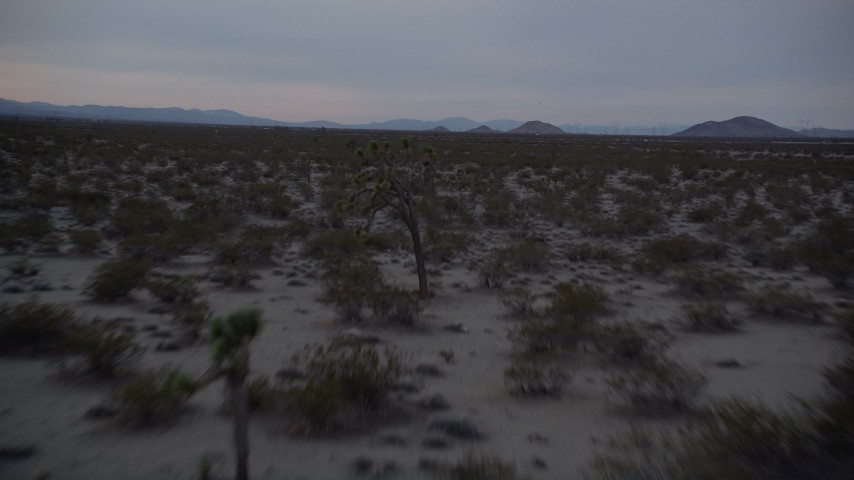 5K stock footage aerial video low fly over of desert plants at twilight in Mojave Desert, California Aerial Stock Footage | AX0007_028