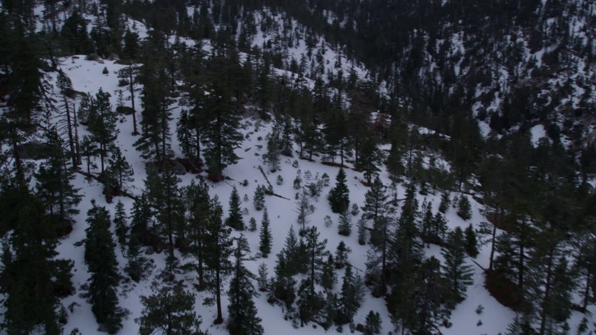 5K stock footage aerial video pan across evergreen trees in the San Gabriel Mountains with winter snow at twilight, California Aerial Stock Footage   AX0008_028