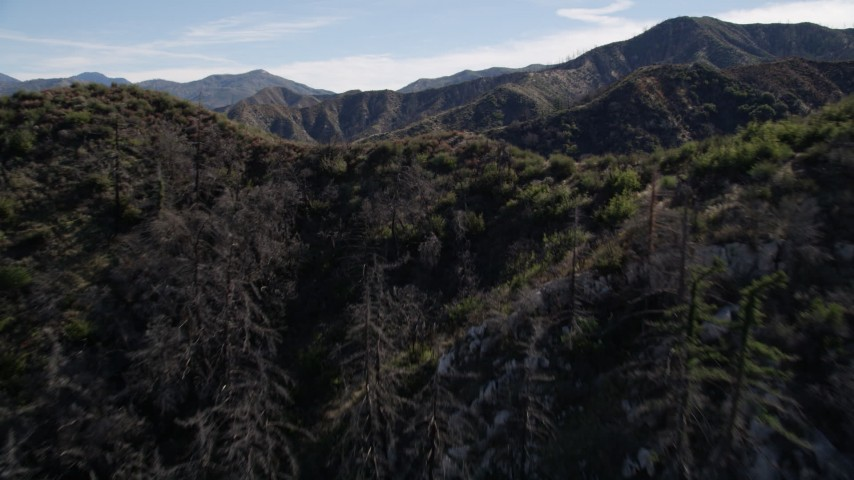 5K aerial stock footage video of fly over tree-lined ridge in the San Gabriel Mountains, California Aerial Stock Footage | AX0009_027