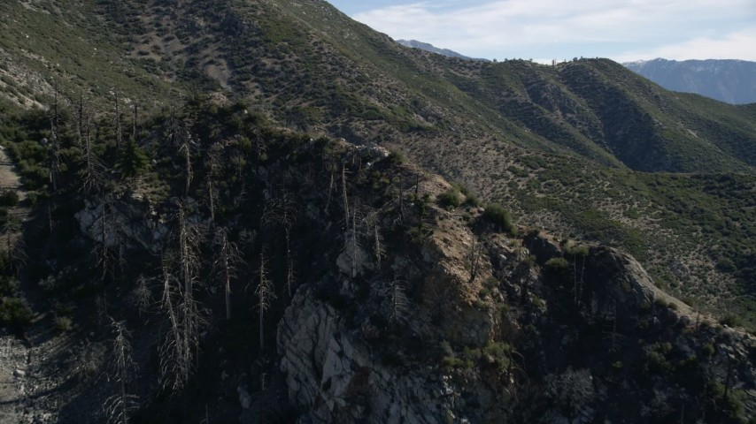 5K aerial stock footage video of dead trees on mountain slope in the San Gabriel Mountains, California Aerial Stock Footage | AX0009_044