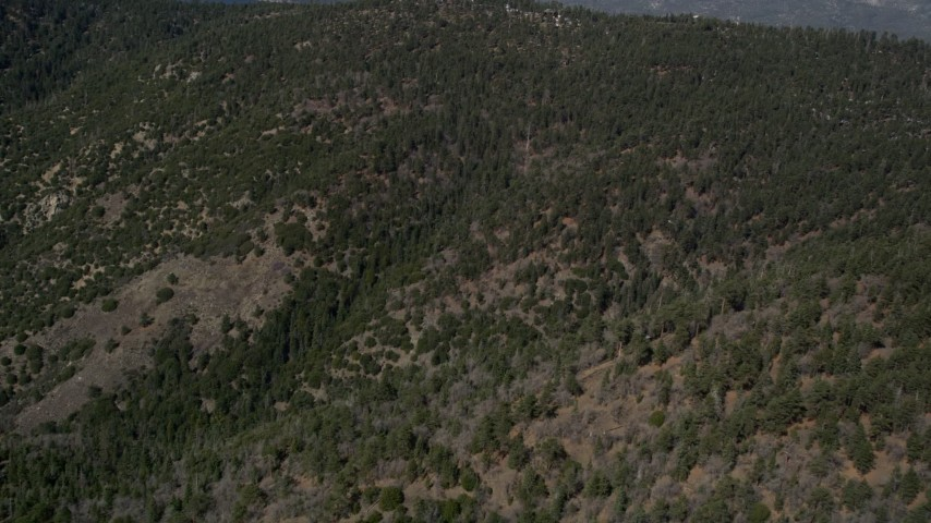 5K stock footage aerial video fly over a slope crowded by evergreens in the San Bernardino Mountains, California Aerial Stock Footage   AX0009_127