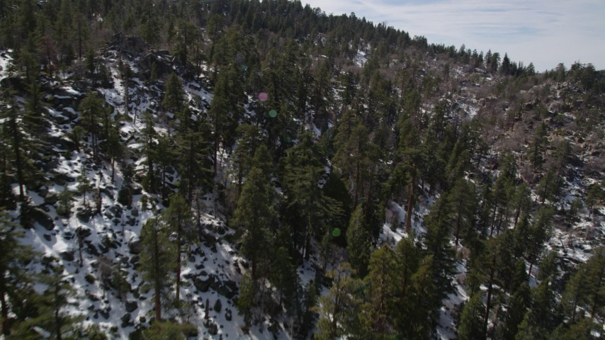 5K stock footage aerial video fly over snowy slope with evergreen forest in the San Bernardino Mountains, California Aerial Stock Footage | AX0010_027