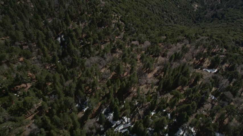 5K aerial video bird's eye of trees and small patches of snow in the San Bernardino Mountains, California Aerial Stock Footage | AX0010_045