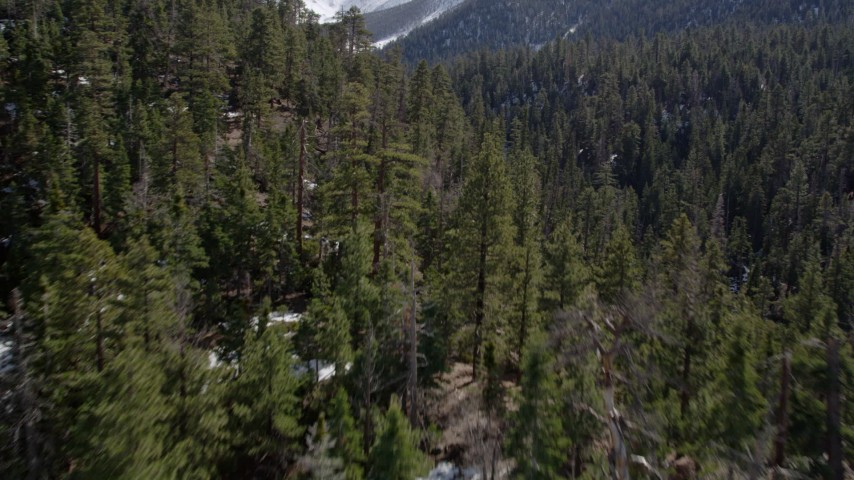 5K stock footage aerial video low fly over of forest and snow patches in the San Bernardino Mountains in winter, California Aerial Stock Footage | AX0010_055