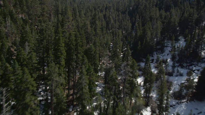 5K aerial video low fly over of evergreen forest and snow in the San Bernardino Mountains, California Aerial Stock Footage | AX0010_057