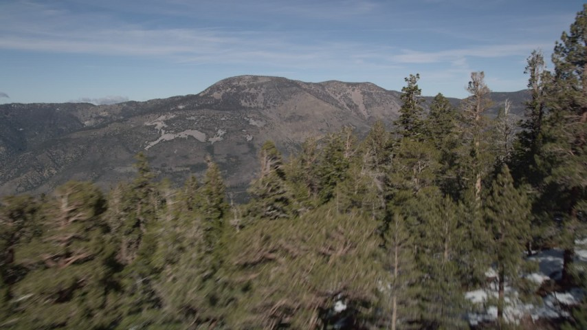 5K stock footage aerial video of flying over evergreens on slopes in the San Bernardino Mountains with patches of snow, California Aerial Stock Footage | AX0010_061