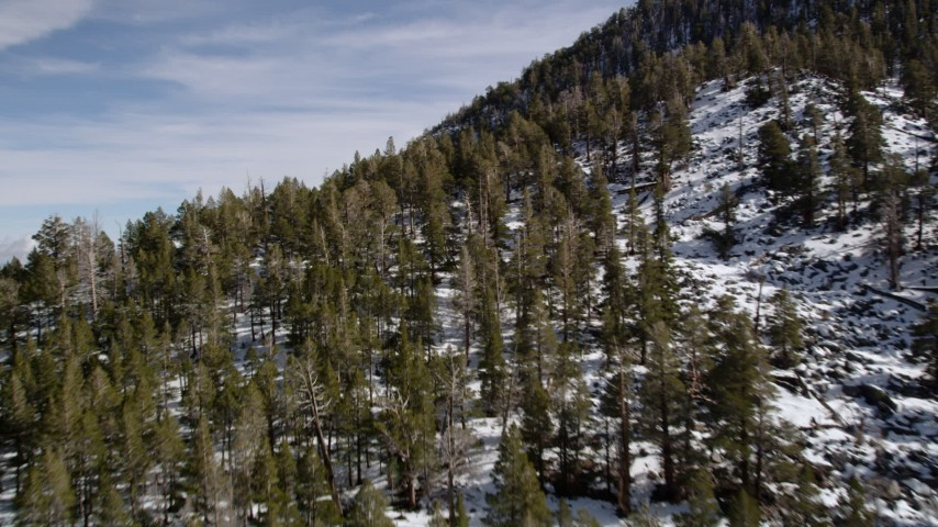 5K stock footage aerial video fly over evergreens on snowy slopes in the San Bernardino Mountains in winter, California Aerial Stock Footage   AX0010_063