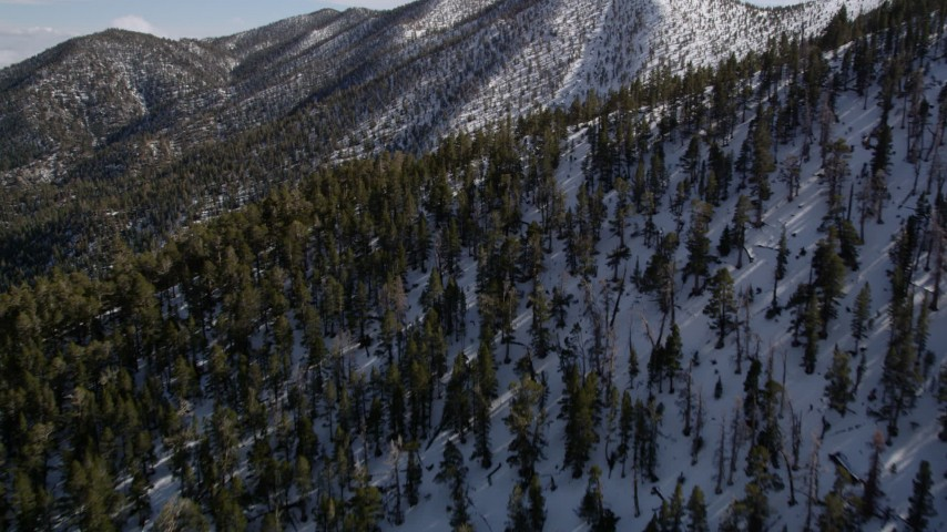 5K stock footage aerial video fly over forest and approach snowy peak in the San Bernardino Mountains in winter, California Aerial Stock Footage | AX0010_065