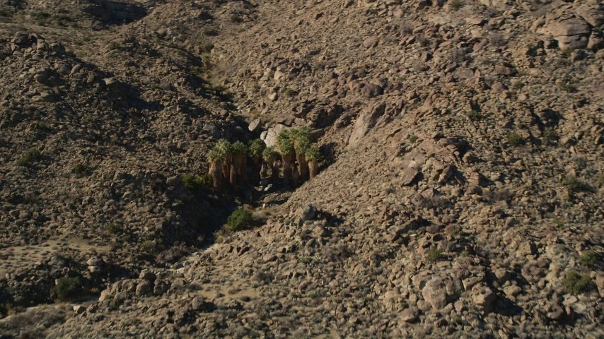 5K stock footage aerial video approach palm trees in the mountains, San Jacinto Mountains, California Aerial Stock Footage | AX0014_006