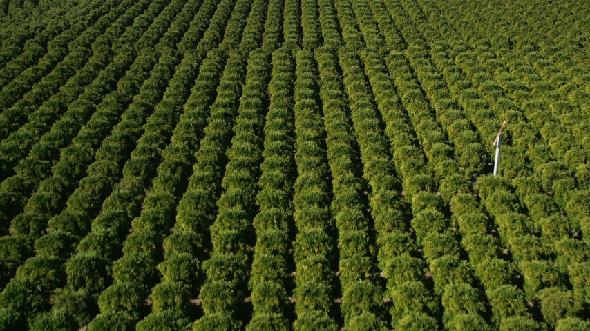 5K stock footage aerial video of flying over an orchard, Temecula, California Aerial Stock Footage | AX0014_063