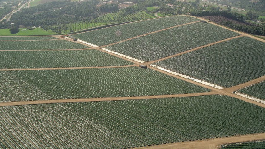 5K stock footage aerial video fly by fields with crops, Fallbrook, California Aerial Stock Footage | AX0015_033