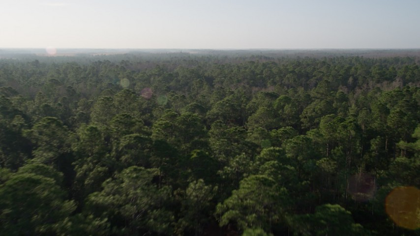 5K stock footage aerial video fly over forest in Orlando at sunrise in Florida Aerial Stock Footage | AX0018_033