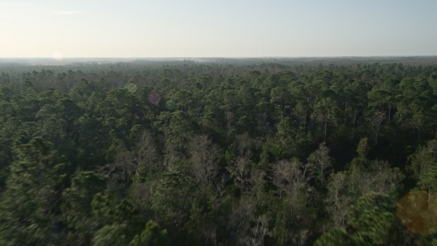 5K stock footage aerial video fly over forest in Orlando at sunrise in Florida Aerial Stock Footage | AX0018_033E