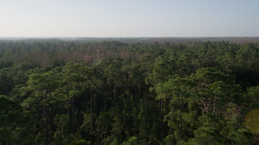5K stock footage aerial video fly over Orlando forest at sunrise in Florida Aerial Stock Footage | AX0018_034
