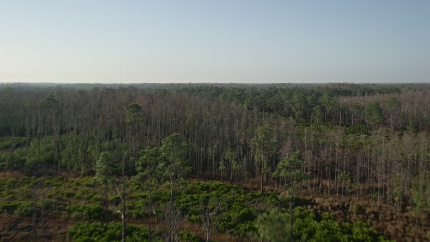 5K stock footage aerial video fly over tall forest trees in Orlando at sunrise, Florida Aerial Stock Footage | AX0018_035