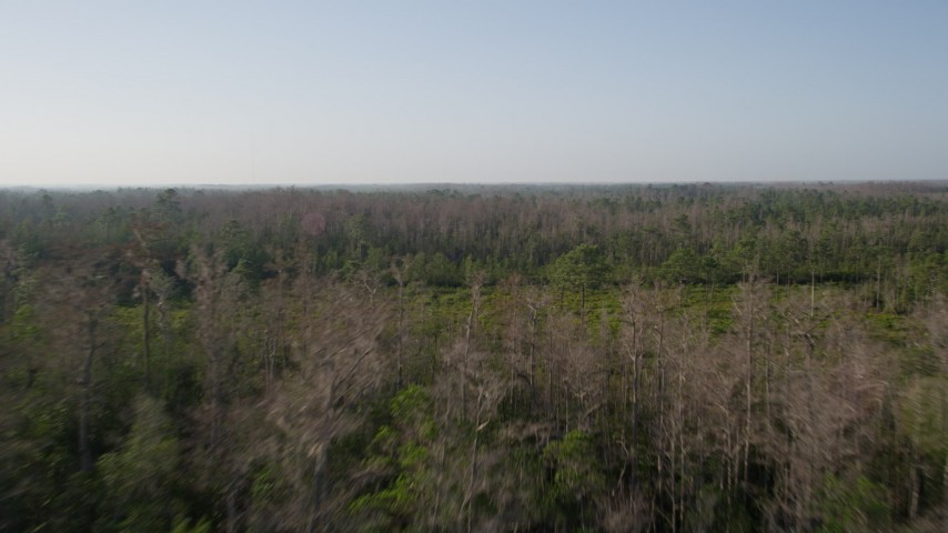 5K stock footage aerial video fly over deciduous forest in Orlando at sunrise in Florida Aerial Stock Footage | AX0018_036